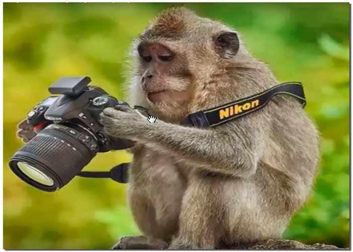Заработок на фотостоках обезьяна фотограф